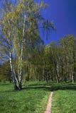 moorland royaltyfria foton