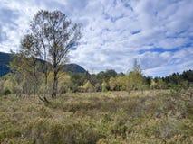Moorland aperto nel ¼ di Kendlmà hlfilzen Fotografie Stock Libere da Diritti