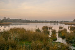 Moorland au lever de soleil Images stock