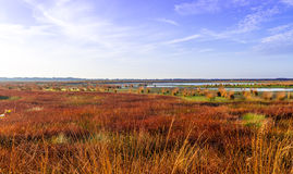 The moorland in autumn Royalty Free Stock Photography