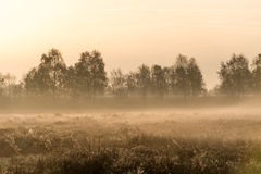 The moorland in autumn Royalty Free Stock Images