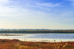 The moorland in autumn Stock Photography
