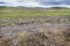 Moorland with burned heather. Clouded sky, Cairngorms national park, Scotland, UK stock photos