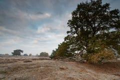 Moorland con la quercia ed il pino rotti fotografia stock