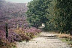 Moorland dans le Veluwe photo stock