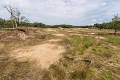 Moorland e foresta dune su sabbia di Drunense e di Loonse fotografia stock