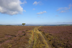 Moorland farm track with pine tree Royalty Free Stock Photography