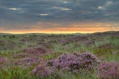 Heath at sunrise Royalty Free Stock Image