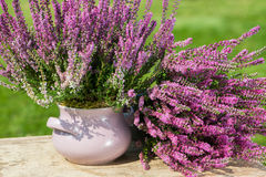 Moorland herb. On wooden background royalty free stock images