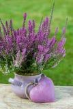 Moorland herb Stock Image