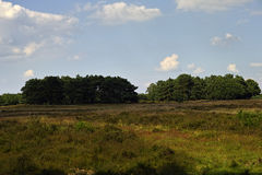 Moorland in Holland. Heath Landscape in Holland, Noord Holland close to Blaricum with trees in the background and a cloudy sky Royalty Free Stock Images