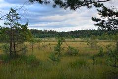 Moorland krajobraz Zdjęcia Royalty Free