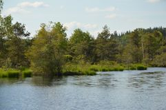 Moorland with lake and trees. Upper Bavarian moorland with lake, trees and bushes and a cloudy sky stock photography