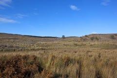 Moorland landscape Royalty Free Stock Photo