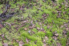 Moorland with leaves and moss. At Tyresta nationalpark, Sweden stock photo