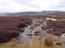 Moorland scene of heather and water. Moorland near Osmotherley looking to Live More way showing the moors in their natural appeal royalty free stock photos