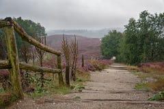 Moorland nel Veluwe Fotografie Stock Libere da Diritti