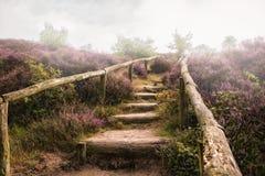 Moorland nel Veluwe Immagini Stock