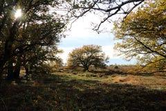 Moorland nello stato olandese Overijssel fotografia stock libera da diritti