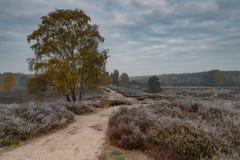 Moorland, nuvola e freddo immagini stock libere da diritti