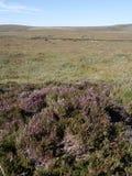 Moorland, Północny Uist Zdjęcie Royalty Free