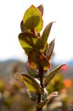 Moorland plant Stock Images