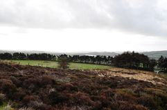 Moorland in staffordshire bracken trees water grasses stock photography