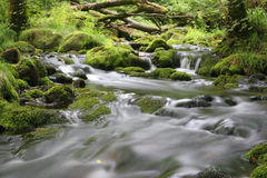 Moorland stream Royalty Free Stock Photos