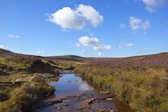 Moorland stream Stock Photos