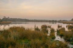 Moorland at Sunrise. Oisterwijk, The Netherlands stock images
