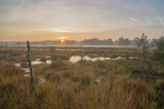 Moorland at Sunrise. Oisterwijk, The Netherlands royalty free stock photography