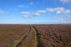 Moorland tracks Royalty Free Stock Photos