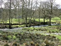 Stream and trees in the Yorkshire Moors, England. Moorland and trees growing beside a stream flowing through the Yorkshire Moors, England, UK stock photos