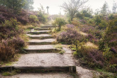 Moorland in the Veluwe. Royalty Free Stock Photo