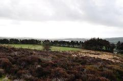 Moorland w Staffordshire bracken drzew wodnych trawach fotografia stock