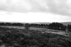 Moorland w Staffordshire bracken drzew wodnych trawach obrazy stock