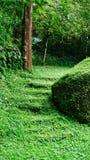 Moos überwucherte Treppe stockbild