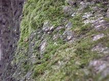 Moos на расшиве Стоковое фото RF