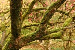 Moos-abgedeckte Baumzweige und Falllaub Lizenzfreies Stockfoto