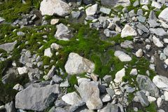 Moos-abgedeckter Wasserfall und Pool Schönes Moos und Flechte bedeckten Stein Hintergrund gemasert in der Natur lizenzfreie stockfotos