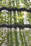 Moos auf alten Dachplatten Stockfoto