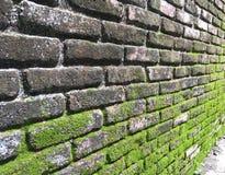 Moos auf Backsteinmauer Lizenzfreie Stockfotos