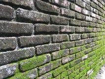Moos auf Backsteinmauer Stockfotos