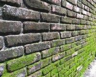 Moos auf Backsteinmauer Stockfoto