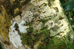 Moos auf Barke im Wald Stockfotos