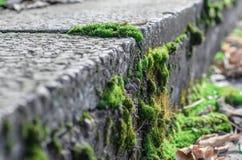 Moos auf Beton. lizenzfreie stockbilder