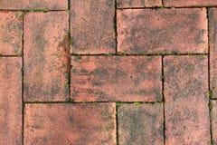 Moos auf Boden des roten Backsteins Stockbild