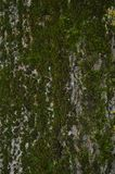 Moos auf dem Baum Stockfotografie