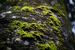 Moos auf dem Baum Lizenzfreies Stockfoto