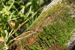 Moos auf dem Baum Lizenzfreies Stockbild